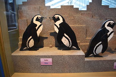 Bird talk (earthdog) Tags: 2019 nikon nikond5600 d5600 18300mmf3563 monterey montereybayaquarium aquarium animal bird penguin word test communication display