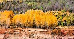 Last Stand (SammCox) Tags: autumn fall fallcolors painterly redfield season topazstudio umatrix3d walden colorado