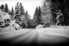 Silent enduro (Teet Liiv) Tags: nordic winter snow deep nature woods cold 2019 bicycle fatbike adventure enduro forest roads blackandwhite