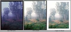 Workflow – Velvia (magnus.joensson) Tags: sweden swedish skåne svedala september countryside hasselblad h2 hc80mm hm1632 fuji velvia 100 exp2007 e6 6x45 81a epson v800 scan fog