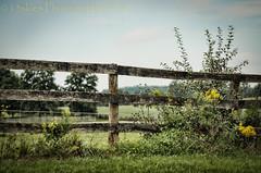 Countryside Fence (HFF) (13skies (Physio)) Tags: hff happyfencefriday countryside countryroad fence woodenfence day daylight outside trees field farm farming fencefriday sonya99