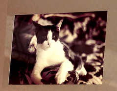"digital photograph of a film photo from my 1983 show ""eclectia"" (nolehace) Tags: fall nolehace sanfranciso fz1000 1118 old photo eclectia cat"