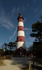 Assateague Lighthouse (adirondack_native) Tags: assateague lighthouse red white blue sky clouds eagle flying bald