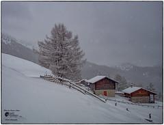 .... è pace sull'alpe ... (Enrico Moser) Tags: trentino lagorai landscape inverno winter invierno neve nieve snow montagna mountain alberi baita