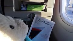 Pasajero Oso en Latam (Gabriela Andrea Silva Hormazabal) Tags: chile puertovaras puertomontt surdechile viaje travel turismo osopolar polarbear osoviajero travelbear oso osito polar ternura peluche