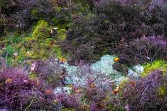 Diversity heath (j.a.vink) Tags: netherlands heath 1855 fujifilm1855mm fujifilm fujifilmxt2 natureart