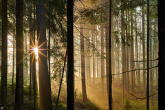 morning revelation (Aspenlaub (blattboldt)) Tags: zeiss sony ilce7rm3 alpha7riii manualfocus manualiris ⚶ emount loxia2485 loxia2485sonnar 85mm 51695547 sonnar landscape nature woods trees forest sun sunburst rays sunstar green orange topographic europe germany thuringia sunrise handheld wald bäume 森林 樹 陽光 光線 陰影 schatten licht lightandshadow dreamlike laudātū tactilelight touchablelight tangiblelight specialthankstochristophecasenaveandhisteamfromzeissfortheirpersonalinvolvementinthedevelopmentoftheloxialensline eisenbergermühltal