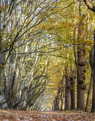 Autumnal forest (Wouter de Bruijn) Tags: fujifilm xt2 fujinonxf56mmf12r forest path tree trees leaf leaves fall autumn autumnal westhove manteling oostkapelle veere walcheren zeeland nederland netherlands holland dutch outdoor landscape nature