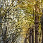 Autumnal forest thumbnail