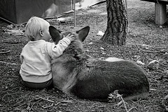 """A Boy And His Dog Sharing A Secret <a style=""""margin-left:10px; font-size:0.8em;"""" href=""""http://www.flickr.com/photos/55747198@N00/32367245618/"""" target=""""_blank"""">@flickr</a>"""