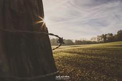 2018-12-11_07-48-13 (Light and shade by Monika) Tags: autumn münsterland sun farbenspiel sunreflection motiv