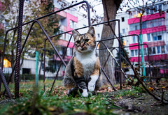 Feline moments (Pan.Ioan) Tags: cat animal pets mammal feline domestic city nature outdoors sitting