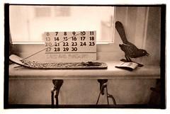 days are numbered (Isosceles Diego) Tags: lith aerecon stilllife martwanatura csendélet мртваприрода stillleben bodegón naturemorte zátiší 静物画