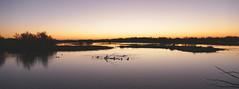 AIGUAMOLLS DE L'EMPORDÀ - ALBADA (Joan Biarnés) Tags: albada amanecer aiguamollsdelempordà santperepescador girona catalunya 288 panasonicfz1000