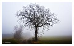 Into the fog © Nicola Roggero (Nicola Roggero) Tags: fog nikon nikon7200 wild intothefog naturalscape nicolaroggeroimmagini nicolaroggero scape winter misty peace silence shot light nebbia lonely piedmont rural ruralscape italy piemonte tettineirotti 35mm