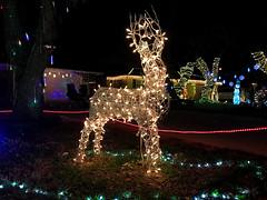 Christmas Lights Reindeer 5 (Lux Llama Productions) Tags: christmas lights holiday holidays winter december jan january dec decor decorations decoration prop jesus usa us unitedstates florida bocaraton house suburb hot light led cool awesome santa sleigh reindeer deer trees tree orb