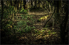 Forest Walk (Ronnie Da) Tags: forest trees woods branches light nature wales leaves green
