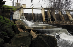Vasona Dam (LeftCoastKenny) Tags: losgatoscreektrail person creek dam spillway trees boulders grass water fence ladder