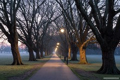 Jesus Green Avenue (marona-photography) Tags: cambridge jesusgreen avenue trees streetlamps