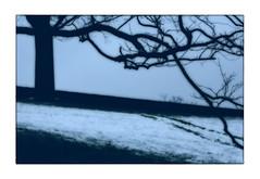 Winter-Wolfszeit-Blu (wolfiwolf) Tags: wolfiwolf wolfi wolf wolfiwolfy wolfiart wolfskunst bildlen blue blau bluenote bleu blu winter diagonal dickesfell eneamaemü trees ihaanblue blues snow jazzinbaggies jazz ja art butler esblautsoblau creation composition conductor derexplorierendste elysium farkas farky fullmoon genie huldigung ich jo kleinewolfis kunsti licht meinneuesbildlen multiversum marieschen niemand offenbaren pur quantensuppe quantensymphonie quantentheorie reimen stube stüben schöpfung jahreszeiten tag universum universe ursprung vollkommen wer existenz crystal zen zentrum trist