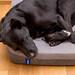 Ein schlafender schwarzer Labrador auf einem Casper Kissen