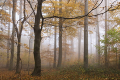 Foggy Forest (pwendeler) Tags: fog foggy forest foggyforest mist misty nebel nebelig tree viaregia frankfurtarea germany leave nature naturephotography natur naturfotografie sonyalphaa6500 sony
