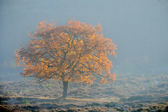 Planken Wambuis (Arnold van Wijk) Tags: bos forerst trees boom bomen herfst autumn gelderland nederland netherlands plankenwambuis veluwe sunrise zonsopkomst natuur nature landschap landscape