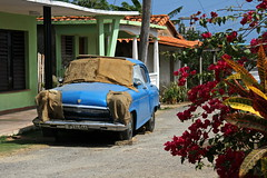 """The"" Old Blue Car (asitrac) Tags: 17blue 52 52in2018challenge 60d asitrac americas amériques bougaivillea canon caraïbes caribbean centralamerica color cuba flower hav island nature pinardelrío plant puertoesperanza travel westindies automobile bleu blue car eos iconic old oldcar rawcr2 scenery street transportation typical vegetal vintage voiture water ©asitrac eo"