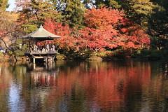 Full Autumn Color in Japanese Garden (seiji2012) Tags: 成田 成田山公園 紅葉 モミジ 反射 四阿山 日本庭園 narita pond foliage reflection momiji japanesemaple arbor japan autumn