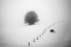 Mist (PaxaMik) Tags: snow neige misty mist blackandwhitephotos plateauderetord retord tree arbredhiver blanc white solitude zen silence
