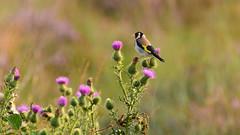 DSC_3066x_00001_bewerkt-1 (frans.oost) Tags: dawn sunrise bird animal flower landscape abigfave dmslair