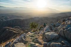 untitled (97 of 125).jpg (xen riggs) Tags: desert california joshuatreenationalpark february2018