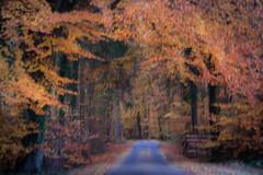 Dreamland (ursulamller900) Tags: hss pentacon28100 autumn autumncolors landscape landschaft wald herbst