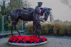 war horse and soldier (sure2talk) Tags: warhorseandsoldier warhorse soldier sculpture poppies wewillrememberthem superheroes nikond7000 nikkor1855mmf3556afs 118picturesin201849superheroes