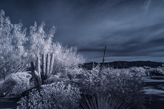 Anza Borrego Desert Landscape In Infrared (Bill Gracey 21 Million Views) Tags: infrared infraredphotography convertedinfraredcamera ir surreal anzaborregodesertstatepark anzaborregodesert landscape landscapephotography nature naturalbeauty channelswapping