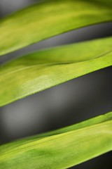 Stripes (helensaarinen) Tags: plantleaves dotsandstripes macromondays