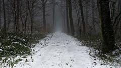 Moulainville #3 - Dec 18 - 17 (sebwagner837_55) Tags: forêt neige moulainville meuse lorraine grand est grandest france snow forest verdun