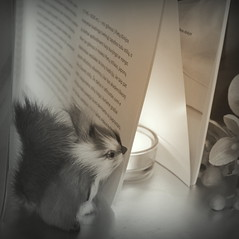 Every page hides a story... (Agne Barde) Tags: smileonsaturdays book squirell candle flower square crazystilllife stilllife