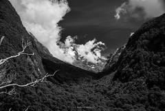 Why are you shaking like a leaf (.KiLTRo.) Tags: fiordlandnationalpark southland newzealand nz kiltro paisaje landscape mountain clouds sky cielo forest woods nature tree