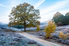 Early morning walk NP Veluwezoom (rudyvanmiltenburg) Tags: veluwe veluwezoom gelderland autumn fujifilmxt20 landscapes netherlands