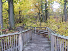 Princess Point Trail (WabbitWanderer) Tags: cootesparadise cootes conservation wilderness hamilton ontario princesspointtrail trail autumn leaves colour