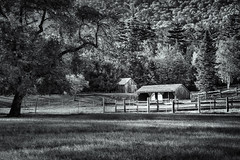 Sheds in the meadow (FotoFloridian) Tags: tree ruralscene usa builtstructure trees meadow hillside newengland newhampshire wood alpha sony a6000 fence monochrome blackandwhite barn shed