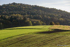 Fields in the late afternoon (darko.jakovac) Tags: nikon d750 nikond750 sigma 150600 sigma150600 contemporary telephoto dolenjska slovenija slovenia slowenien discover explore trip travel traveling relax view viewpoint ngc season outdoor outdoors outside hiking adventure perspective activities roam visit environment explorers ecological nature landscape scenery scenic idyllic beauty beautiful seasonal unique perfect superb magnificient stunning impressions outstanding popular colors colorful postcard wallpapper green tree forest land field afternoon sky countryside