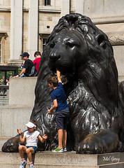 Trafalgar-lion_DSC9426 (Mel Gray) Tags: london england unitedkingdom