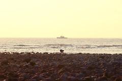 (annie0425a) Tags: 黃色 橘色 天 老人 人 石 石頭 浪花 太陽 夕陽 沙灘 海 海邊