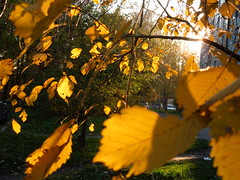 branches (cloversun19) Tags: rain animal field grass landscape branches leafs foliage sky russia russian spb tree walking country holiday holidays park garden dream dreams positive forest happy view grey legend fairytale fir firtree birch village evening romantic october september car road street blue maple leaves town city light sun yellow autumn trees leaf