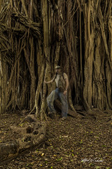 Banyan Tree Ghost_27A8521 (Alfred J. Lockwood Photography) Tags: alfredjlockwood nature banyantree treetrunk selfportrait ghost morning winter bigisland hawaii haunted