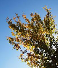 2018_10_0335 (petermit2) Tags: autumn pottericcarr potteric doncaster southyorkshire yorkshire yorkshirewildlifetrust wildlifetrust ywt