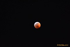 January 20, 2019 - The lunar eclipse as seen from Thornton. (Ed Dalton)