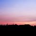 suburbs sunset
